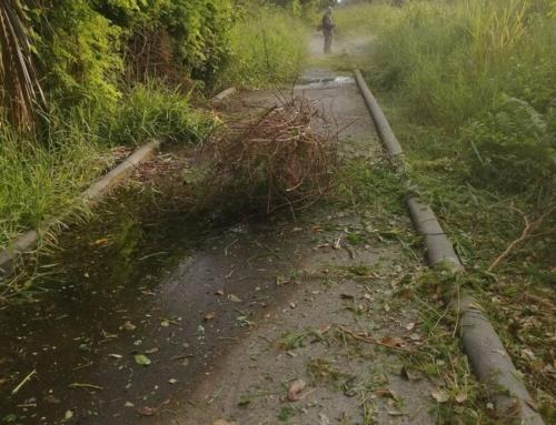 Dan mantenimiento a áreas verdes del municipio.
